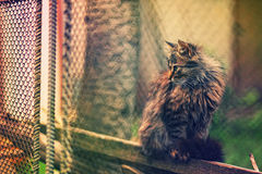 CAT BEHIND A FENCE Stock Image