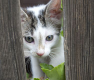 Cat behind a fence Royalty Free Stock Image