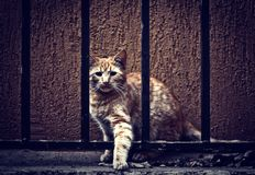 Cat behind fence Royalty Free Stock Image
