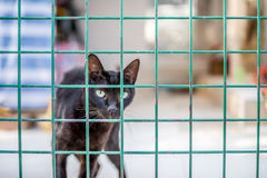 Cat behind fence Stock Photography