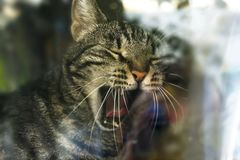 Cat behind glass royalty free stock photo