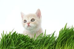 Cat behind grass Stock Images