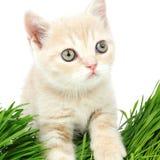 Cat behind grass Royalty Free Stock Photos