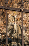 Cat behind iron fence Royalty Free Stock Photography