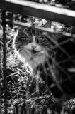 A cat behind a net Royalty Free Stock Image
