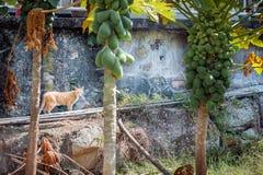 Cat behind trees Stock Photos