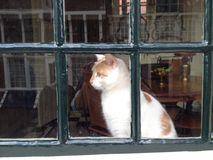 Cat. Behind window Royalty Free Stock Photography
