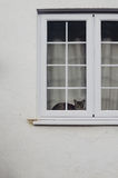 Cat behind window Stock Image
