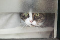 Cat behind window Stock Photo