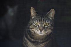 Cat behind a wire door Stock Photo