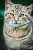 Cat. Being basked in the spring sun Royalty Free Stock Photo