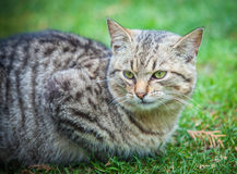 Cat. Being basked in the spring sun Stock Photography