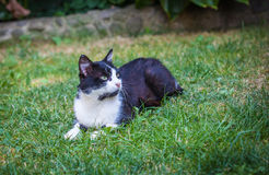 Cat. Being basked in the spring sun Stock Images