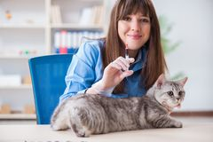 The cat being examining in vet clinic. Cat being examining in vet clinic Royalty Free Stock Photography