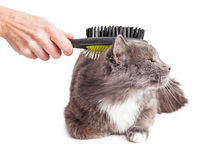 Cat Being Groomed With Brush Stockfoto