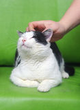 Cat being pet Royalty Free Stock Images