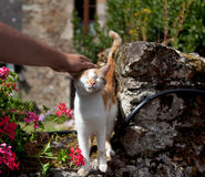 Cat being stroked Stock Photo