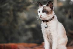 Cat With Bell Royalty Free Stock Image