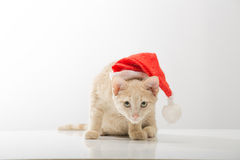 Cat in  bell of Santa Claus Stock Photo