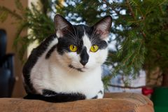 Cat bellow tree Royalty Free Stock Photo