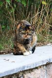 Cat. Belonging to the feline, sub-, wild , is the world`s more extensive family pets. The ancestors of the domestic  are presumably the desert  that originated Stock Photography
