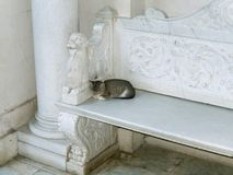 Cat on bench. Cat on white marble bench Stock Photos