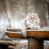 Cat on a bench Royalty Free Stock Images