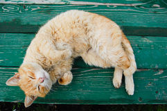 Cat on a bench royalty free stock photo