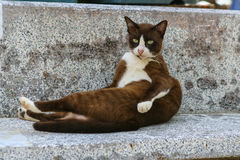 Cat on the bench Royalty Free Stock Photography