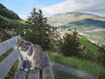 Cat on a bench near the Swiss City of Murren Royalty Free Stock Photos