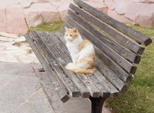 Cat on the bench Royalty Free Stock Images