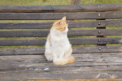 Cat on the bench Stock Images