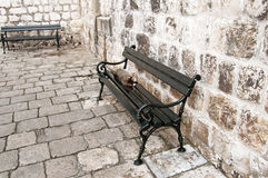Cat on the bench in the old town, Dubrovnik Stock Images