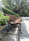 Cat on the bench. Royalty Free Stock Images