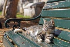 Cat on bench. In park sunbathing Stock Photos