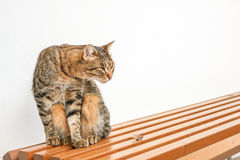 Cat on a bench. Royalty Free Stock Images