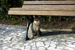 Cat. Beneath on the bench Royalty Free Stock Photography