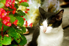 Cat Besides Flowers Royalty Free Stock Image