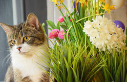 Cat Besides Flowers Royalty Free Stock Photos
