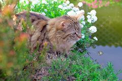 Cat besides pond Royalty Free Stock Photo