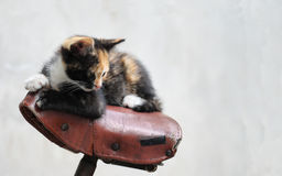 Cat on a bicycle Royalty Free Stock Photography