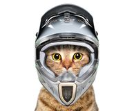 Cat in a bicycle helmet royalty free stock photo