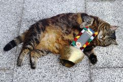 A cat with a big cowbell. A collar with a bell for a cat.  stock photos