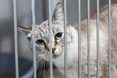 Cat with big eyes in a cage stock image
