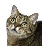Cat with big eyes looking up. Stock Photography