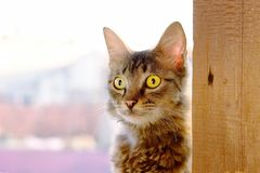 Cat with big eyes, saw something  seriously. With an expression of wonder, amazed and surprise Stock Image