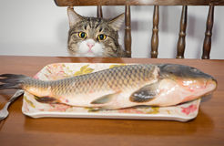 Cat and a big fish Royalty Free Stock Photo