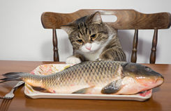 Cat and a big fish Royalty Free Stock Photography