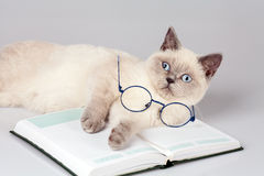 Cat with big glasses lying on the book Stock Image