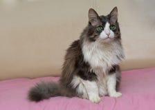 Cat with big green eyes Stock Photos